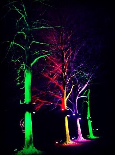 Just Pretty Trees