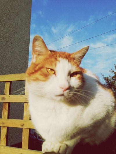 Catonfence Jaspurr Cats My Cat