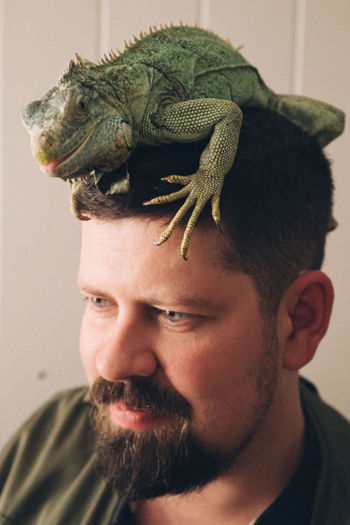 Close-up of man with chameleon on his head at home