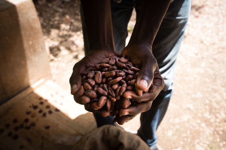 Low section of man holding cacao beans