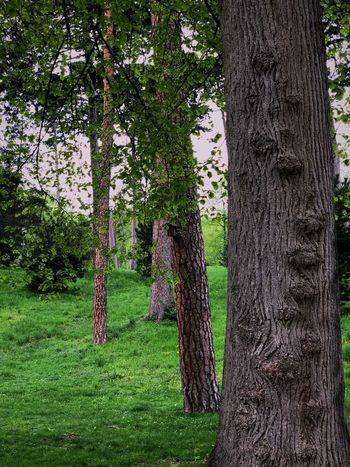 Plant Tree Trunk Tree Trunk Green Color Growth Nature No People Day Grass Land Beauty In Nature Outdoors Park Park - Man Made Space Sunlight Field
