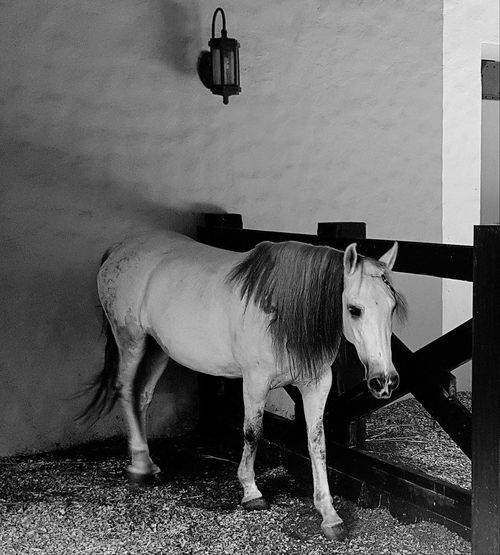 Horse standing outdoors