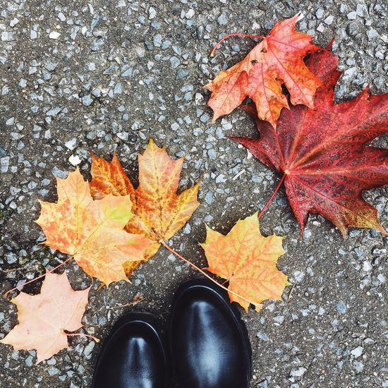 Leaf Autumn Season  Shoe Nature Nature Photography High Angle View
