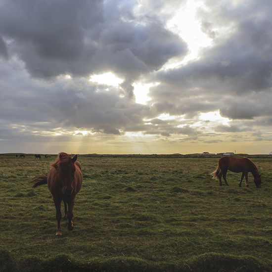 Horses on grassy field against sky