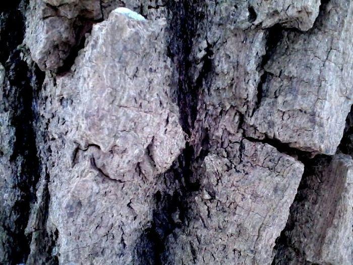 Old tree bark Tree Bark Old Tree