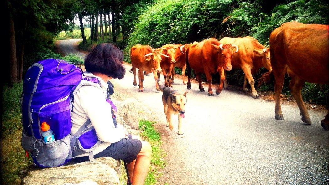 Un alto en el camino On A Hike El Camino De Santiago IPhoneography Take A Break