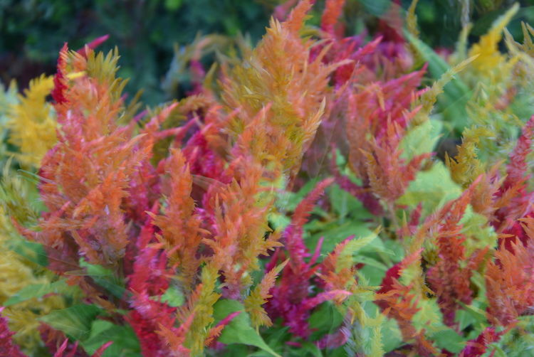Close-up of multi colored plant