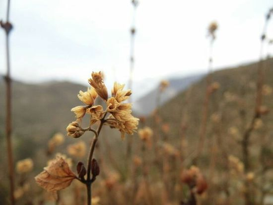 Focus On Foreground Close-up Nature Plant No People Day Growth Outdoors Beauty In Nature Fragility Flower