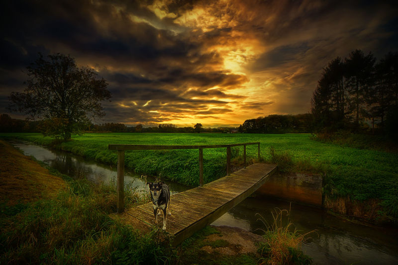 A walk with my dog! Be. Ready. Nederrhein Beauty In Nature Bridge Canon Cloud - Sky Day Dog Field Grass Growth Landscape Nature No People Outdoors Scenics Sky Tree Water