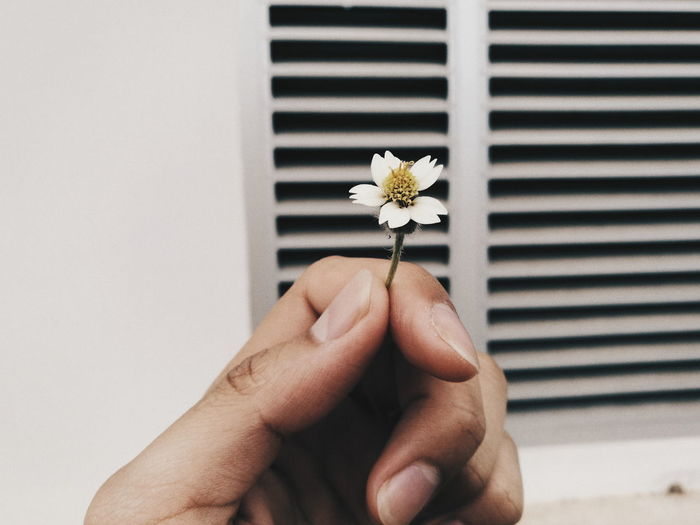 Flower One Person Human Body Part Human Hand Fragility Outdoors Close-up