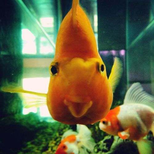 well hello there ! GoldFish!
