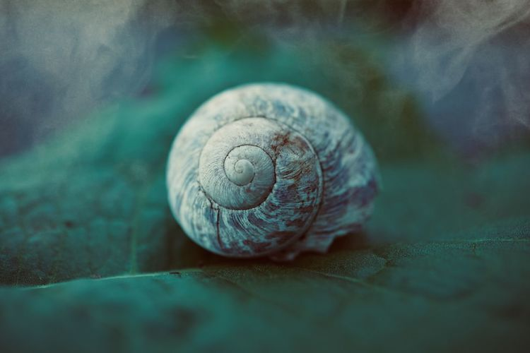 beautiful white snail in the nature Snail White Animal Themes Animal Shell Animal Shell Spiral Nature Summer Animal Wildlife Fragility