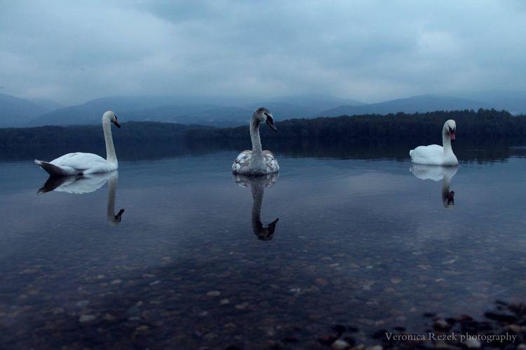 Birds Water Beatifull Photography ?