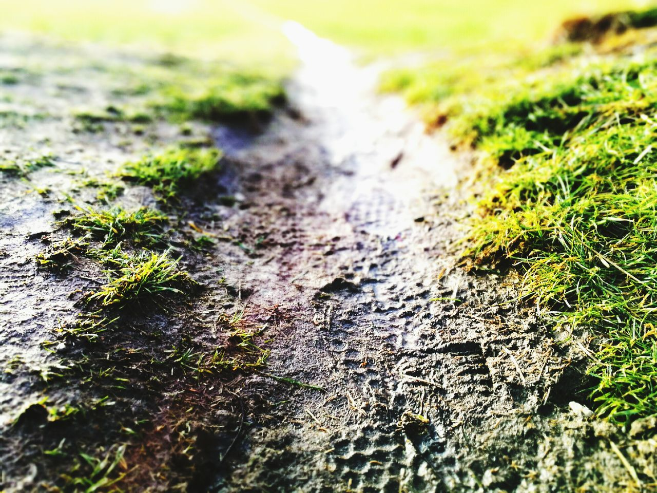 selective focus, textured, no people, moss, nature, close-up, day, outdoors, lichen, fungus