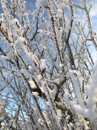 Frost Close-up Finland White Sunny Winter Day Sun Snow Winter Cold Temperature Weather Nature Frozen Tree Beauty In Nature Ice Frost Outdoors Bare Tree Ice Crystal Snowflake No People Day