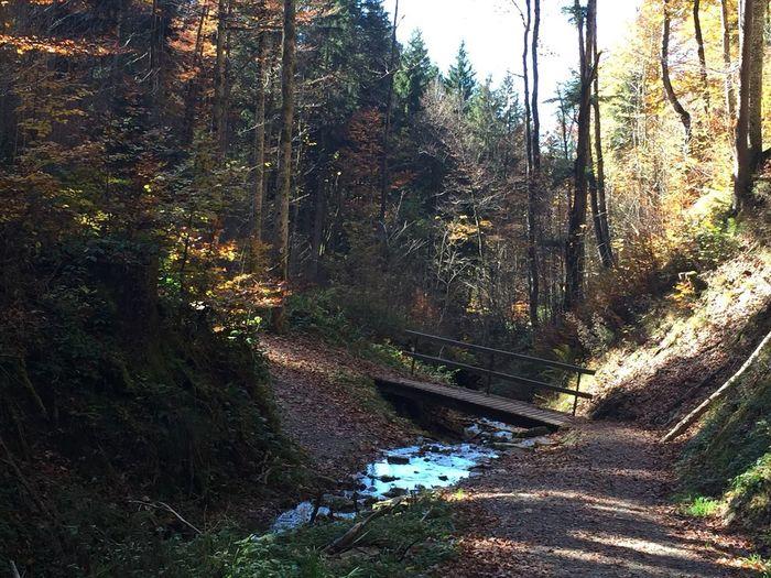 Beauty In Nature Forest Allgäu Alps Bayern Germany