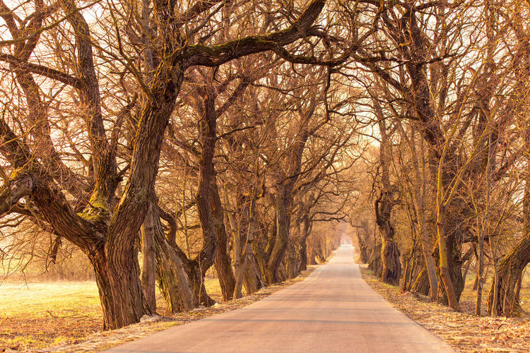 Tree The Way Forward Direction Plant Road Diminishing Perspective Bare Tree Transportation Nature Land Tranquility No People Treelined Branch Beauty In Nature Tree Trunk Tranquil Scene Day Trunk vanishing point Outdoors Belarus Spring Alley Tree Tranquility Sunrise Oak Tree Hedges Poplar Tree Road April
