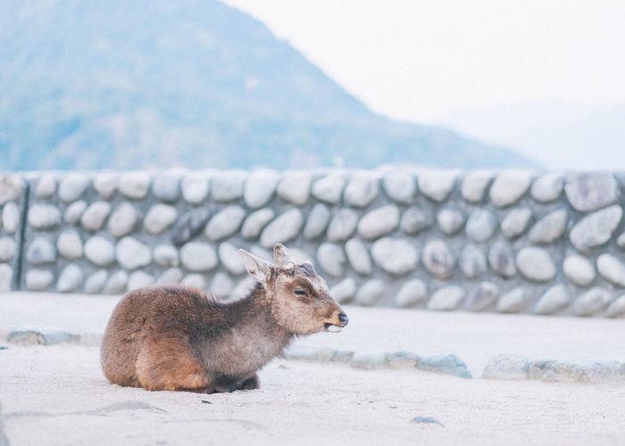 Rabbit on mountain