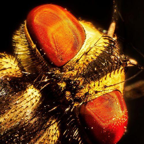 Fly / mosca