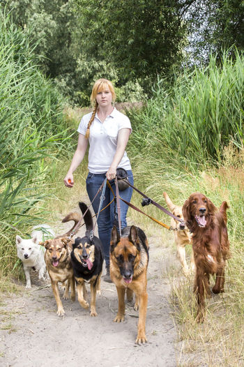 Professional dog walking service of a female service provider Dog Walking Canine Day Dog Dog Trainer Domestic Domestic Animals Front View Grass Hair Hairstyle Looking At Camera Mammal Nature One Animal One Person Outdoors Pet Owner Pets Plant Portrait Women