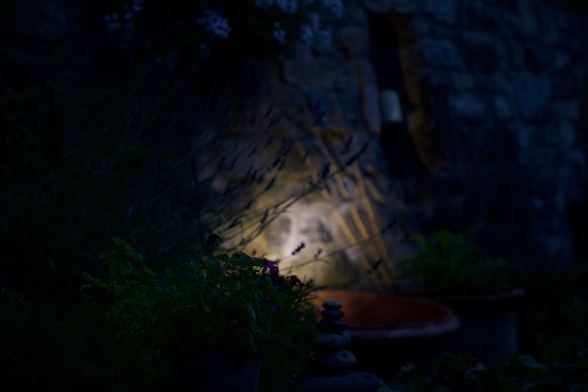 evening garden Beauty In Nature Beauty In Nature Close-up Evening Garden Growth Lavender Light Nature Night No People Outdoors Plant Plants Selective Focus Spot Stones Tranquility Tree