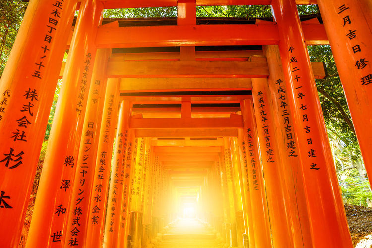 Kyoto, Japan - April 28, 2017: tourist woman walking under red torii gates of famous landmark Fushimi Inari shrine. Travel asia concept. Kyoto's popular landmark. Kyoto, Japan - April 28, 2017: Fushimi Inari Taisha is the most important Shinto shrine famous for its thousands of red torii gates.The lettering engraved on pole are the name of donated organizations Fushimi Fushimi Inari Taisha Fushimi Inari Taisha Shrine Gates Japan Photography Kyoto, Japan Shinto Shrine Shinto Temple TORII Torii Gate Tourist Tourist Attraction  Woman Architectural Column Architecture Belief Building Built Structure Communication Day Fushimi Inari Kyoto Fushimi Inari Shrine Illuminated Indoors  Japan Culture Kyoto Kyoto Japan Kyoto,japan Kyotojapan Low Angle View No People Orange Color Place Of Worship Religion Shinto Of Japan Shintoism Shrine Spirituality Sunlight Text Torii Gate Japan Travel Destinations