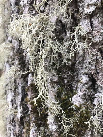 Textured  Nature Close-up Focus On Foreground Tree Trunk Rough Outdoors Rock - Object Day Beauty In Nature No People Tree