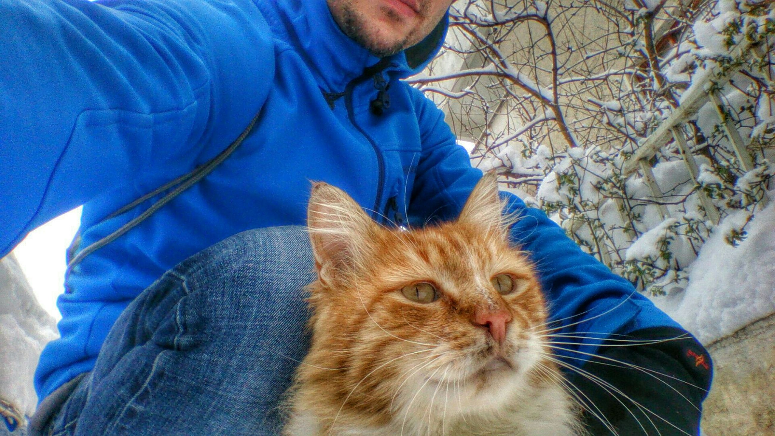 pets, one animal, mammal, domestic animals, lifestyles, animal themes, leisure activity, casual clothing, men, standing, jeans, warm clothing, pet owner, domestic cat, low section, portrait, day, rear view