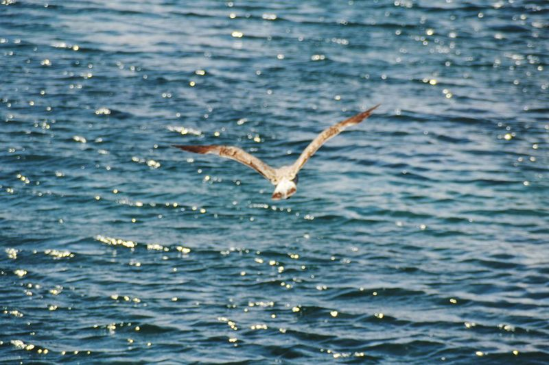 Water Sea Nature Animal Themes Flying One Animal Waterfront Day Beauty In Nature Animals In The Wild No People Outdoors Spread Wings Seagull Fly Flying Bird Fly Away Flying Birds Flying In The Sky Flying Away Flying Seagull Birds Of EyeEm  Birds Wildlife Bird Animals In The Wild