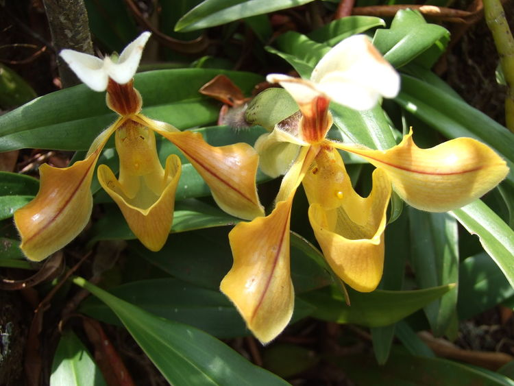 Beauty In Nature Blooming Flower Growth Nature Orchids Plant Yellow