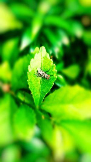 Flies Leaf Full