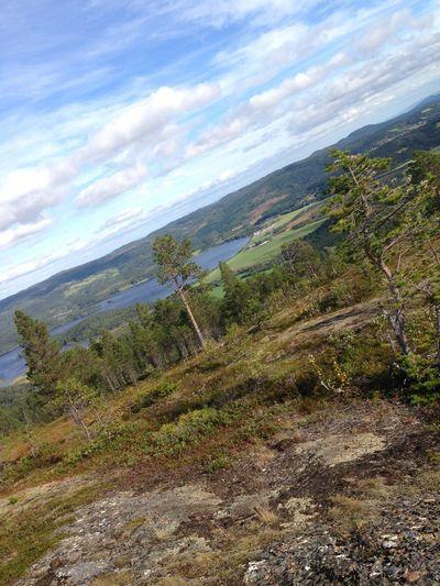 😍🗻Mælberget 🇳🇴 Norway Korsvegen🌲