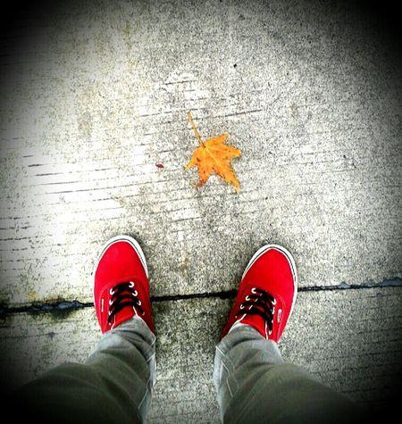 Autumn Colors Simplicity Minimalism Quickpic Walking Around Walking Alone... Colorful