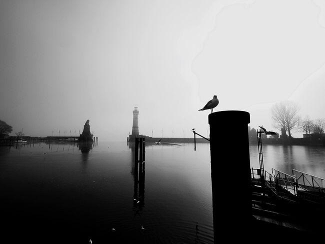 Möwen Lindau Bodensee Misty Seagulls