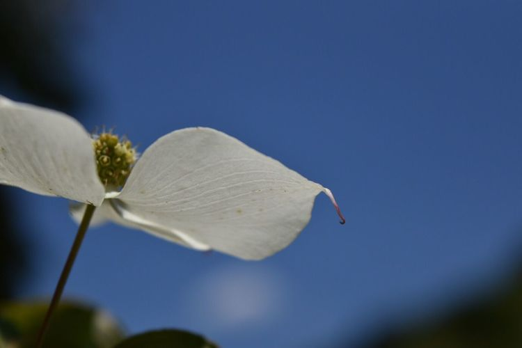 Fragility Nature Flower Close-up Beauty In Nature Petal Day No People Outdoors Freshness Leaf Blue Flower Head Clear Sky