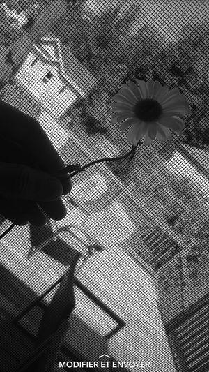 Flower No People 💥Summer💥 💐love Photography 💗 💗 💗 📷 First Eyeem Photo