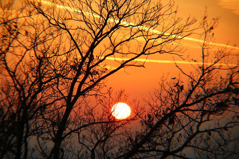 Nature From My Point Of View Tree Nature Beauty In Nature Sunset Bare Tree Branch Tranquility Sky Sun Outdoors No People Scenics Moon Astronomy Day Solar Eclipse Landscapes
