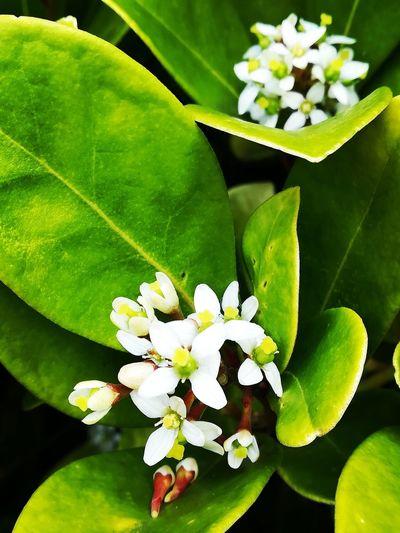Flowers🌸 Flower Flower Head Leaf Close-up Plant Green Color