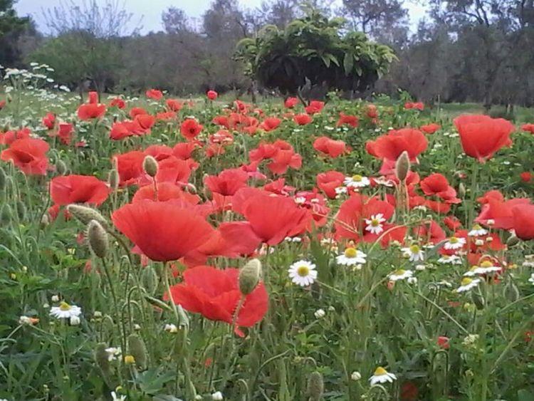 Flowers Landscape Photography Beautiful Nature