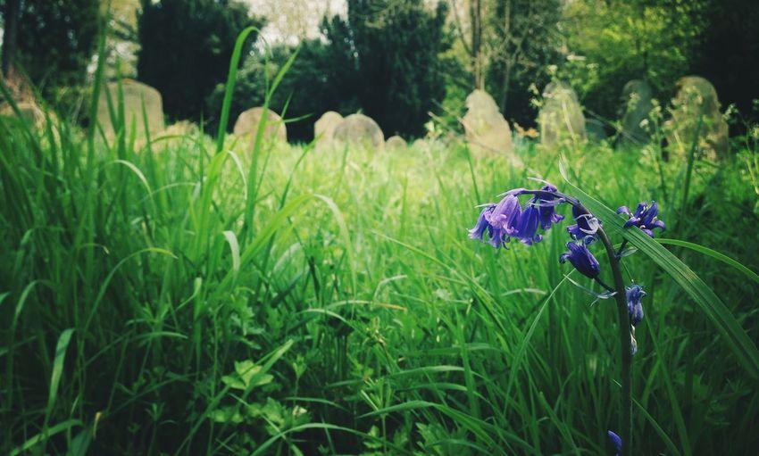 Purple flowers growing on grassy field