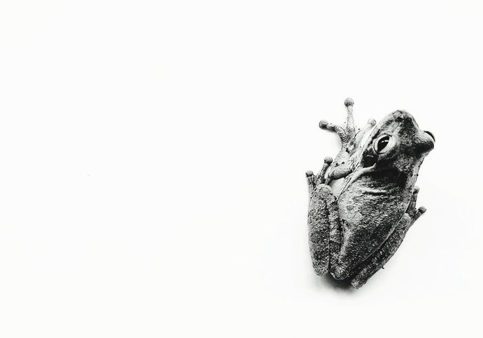 Wildlife Frog White Background Dissolving Pixelated Destruction Close-up Drawn Smiley Face