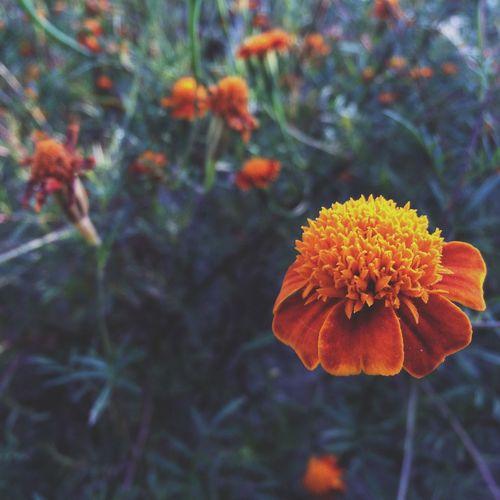 Vilkovo Flower