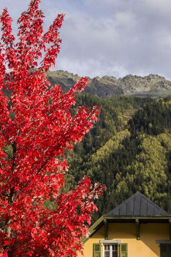 Red flowering tree by building against sky