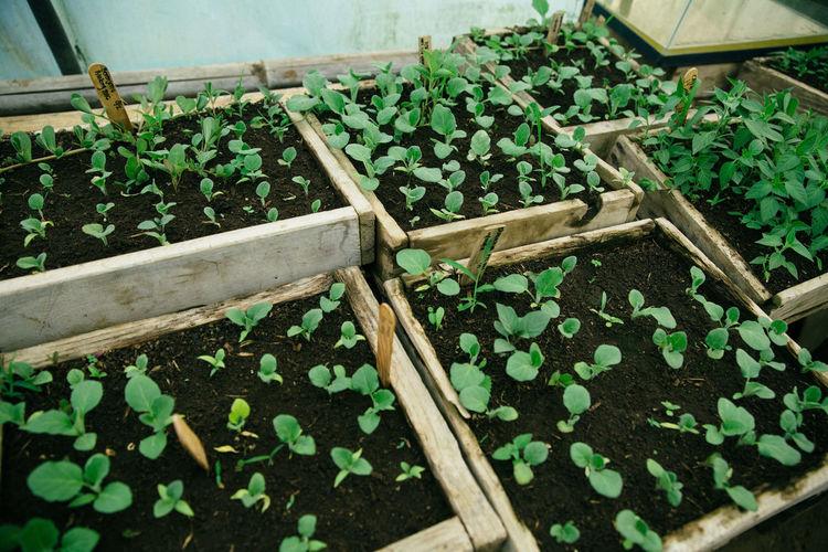 Green Green Color Vegetarian Food Food Freshness Gardening Indoors  Orchard Vegetarian Lifestyle
