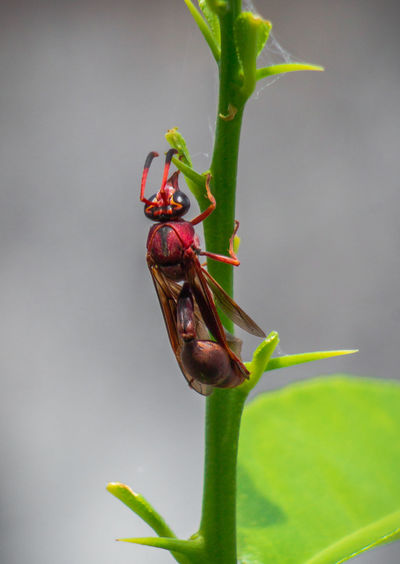 wasp WeekOnEyeEm The Week on EyeEm Week On Eyeem Wasp Hornet Bee Animal Antenna Damselfly Bug Fly Arthropod Pest Animal Wing Beetle