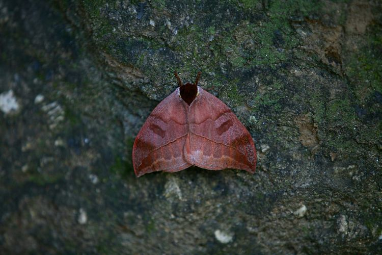 Camuflage Butterfly 70-200mm Photography Nature_collection EyeEm Nature Lover Leaf Check This Out Colors Insect