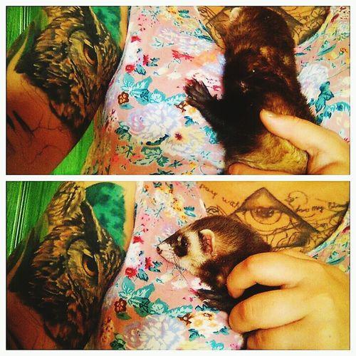 Animal Tattoo Ferrets  Ilovemyferret