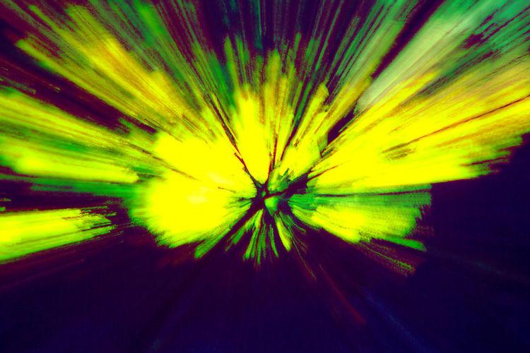 Full frame shot of yellow flowering plant