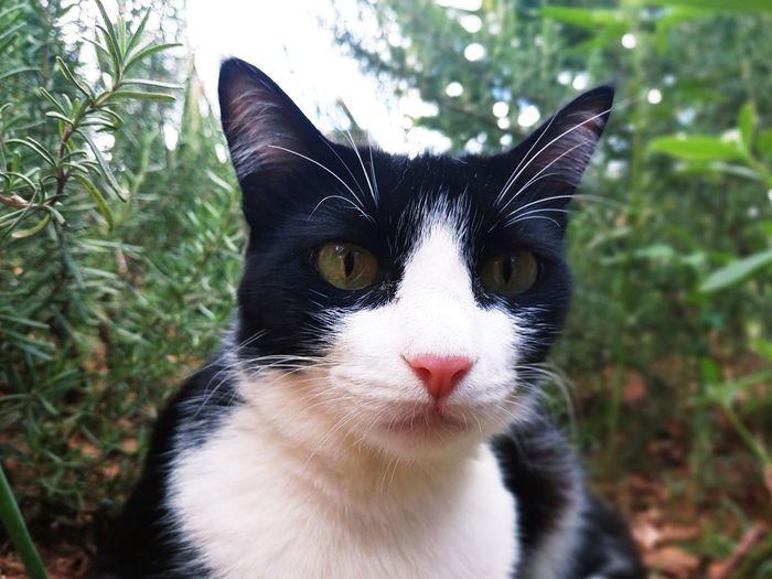 Companheira #gato #gatos #felinos #mascotes #mascota #pet #yolanda Gato Felinos Pet Gatos Mascotes Mascota Yolanda Gata Mascotas Feline Pets Felino Pets Portrait Feline Domestic Cat Looking At Camera Black Color Whisker Close-up