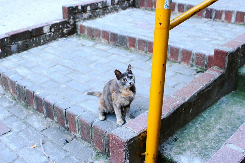 One Animal Animal Outdoors Cat Photography Cats Cats Of EyeEm Cats 🐱 18-55 Mm IS STM Canon 700D Izmir City Landscape Cities By Day City Streets  Tarihi Asansör